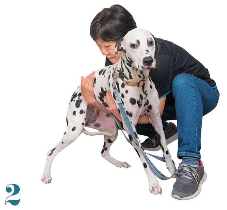 逆の腕で、犬の脇の下を支えます。腰の方を少し持ち上げ、背骨を真っすぐにすることを意識しましょう