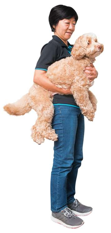 小型犬や子犬は、女性でも「片手抱っこ」で無理なく抱え上げられる場合が多いですが、10kg 前後になると、少々つらくなってくるかも……