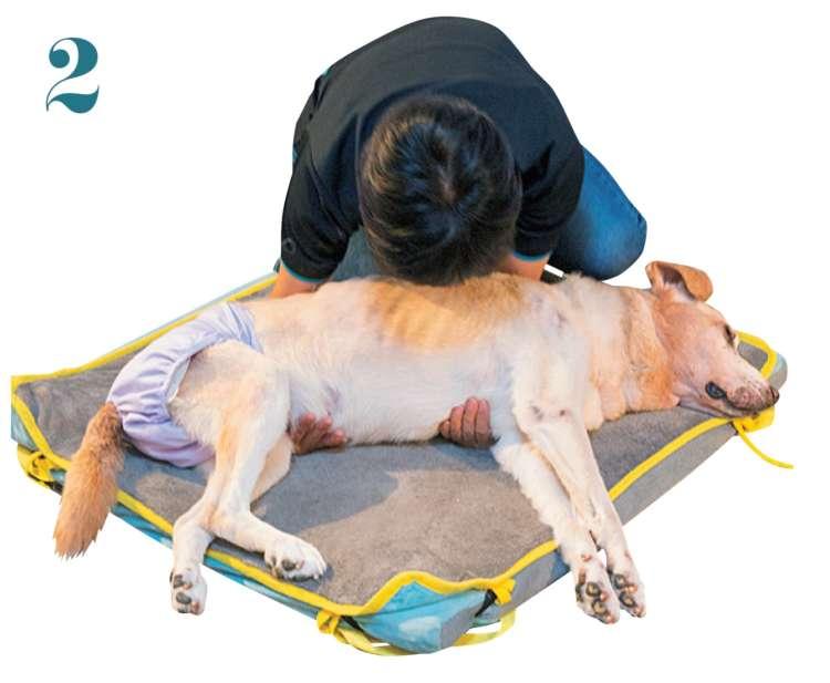 逆の腕も体の下に通し、脇腹をつかみます。この時点で、飼い主さんの体も愛犬に寄せます