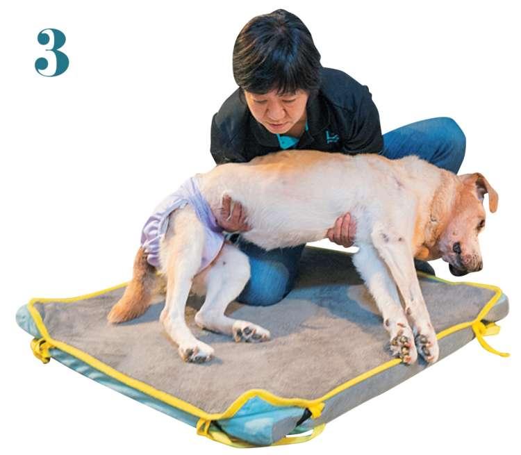 愛犬の体を胸に寄せたまま、背骨を真上に向けることを意識してゆっくりと起き上がらせます