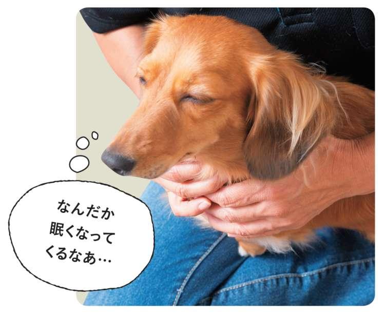 「犬は、肩に手を添えると安心するんですよ」と、三浦先生。飼い主さんから見て後ろ向きに座らせて、肩に手を置きます