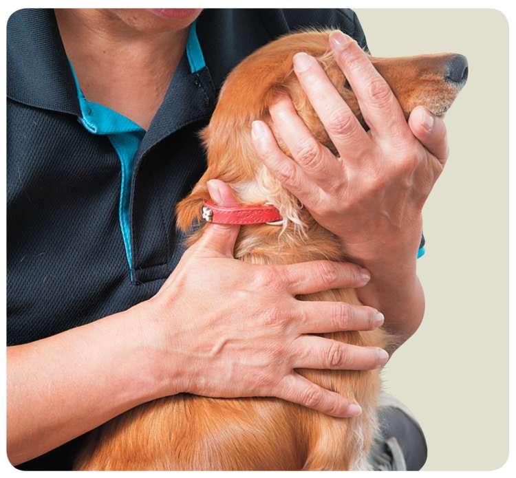 たくさん動いてしまう犬には首輪に指を1本挟むと落ち着く場合も!