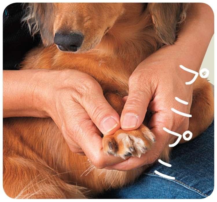 親指で足の甲を支え、他の指で肉球をプニプニともみます。だんだんと指が開いてくるのがリラックスしているサインです
