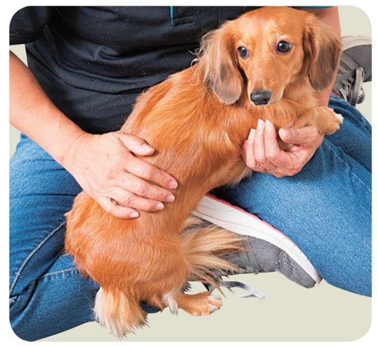 首の方からお尻に向かって、毛並みに沿うようになでましょう。ゆっくり動かすことで、愛犬の気持ちは落ち着きます