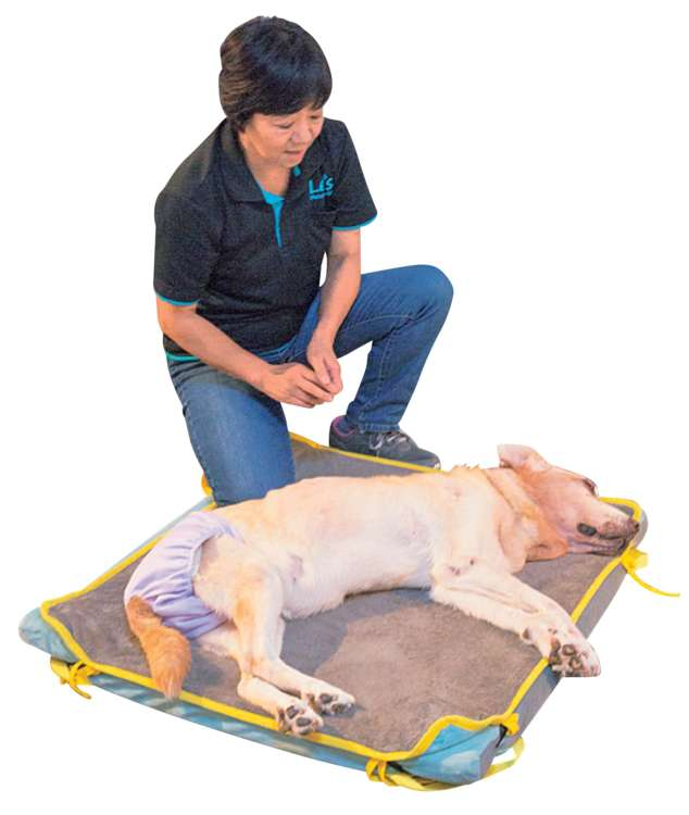 シニア犬には、体の真横から触りましょう