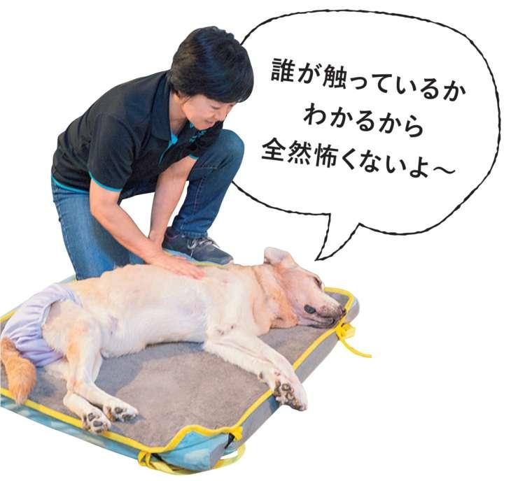 愛犬が自分の方や鳴らした音の方を向いたら、反応している証拠。そっと手を触れて、ゆっくりと体をなでましょう