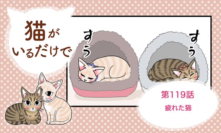 第119話:疲れた猫