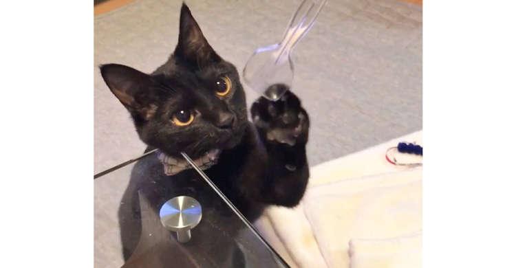 透明なスプーンに興味津々♪ 真剣な眼差しで、何度もちょっかいを出す黒猫さん(ΦωΦ)☆(28秒)