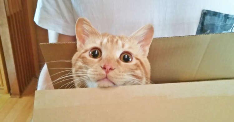 差出人不明のダンボール箱が届いた! 中に入っていたのは、愛らしい姿のモフモフな「荷物」なのでした♡