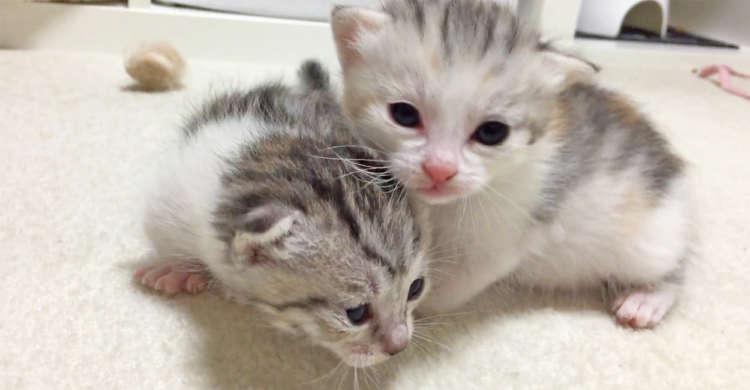 子猫ちゃんたちが、ヨチヨチ歩きで冒険へ出発!? いじらしい姿が可愛すぎましたッ(*>_<*) 40秒