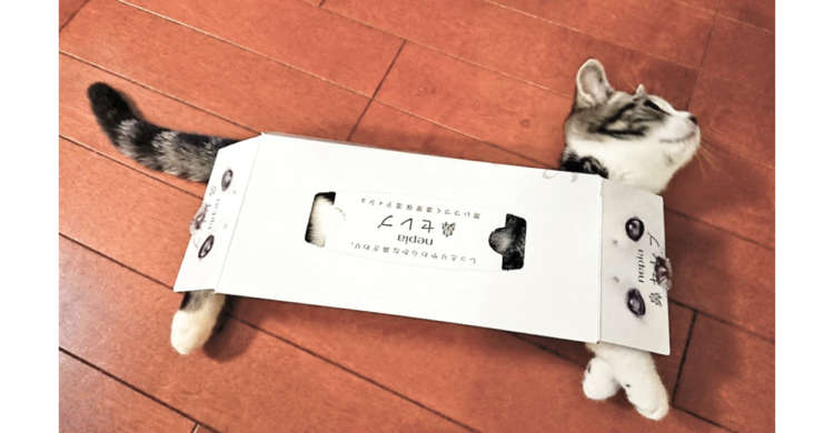 【見事にスッポリ♡】子猫さんが、大好きなティッシュ箱に大はしゃぎした結果…(ノ´∀`*)