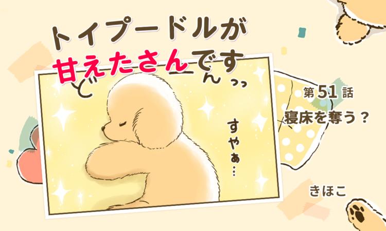 【まんが】第51話:【寝床を奪う?】まんが描き下ろし連載♪トイプードルが甘えたさんです