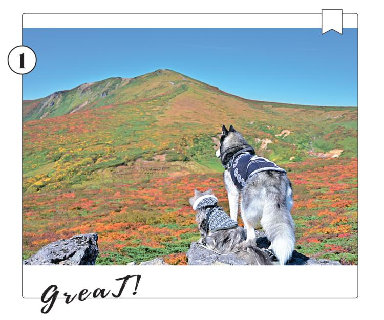 東北の名峰、栗駒山で秋の景色を楽しむののちゃん & Guriくん