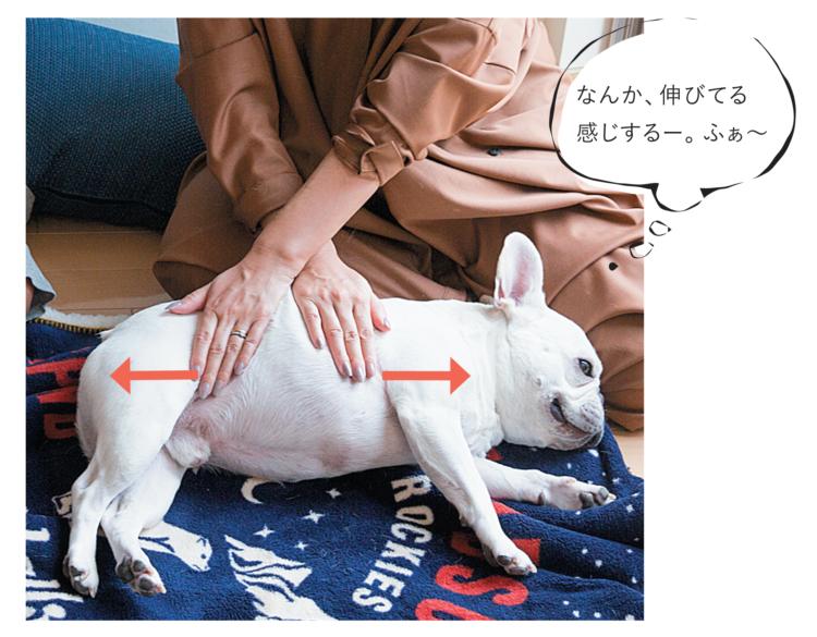 ①息を吸いながら手に少し圧をかけ、愛犬の筋を 伸ばす要領で手を広げます(置いた手の位置は そのまま) ②息を吐きながら手を元に戻します③ 置いた手の位置をずらしながら、前足のつけ根・ 後ろ足のつけ根に当たるまで続けます
