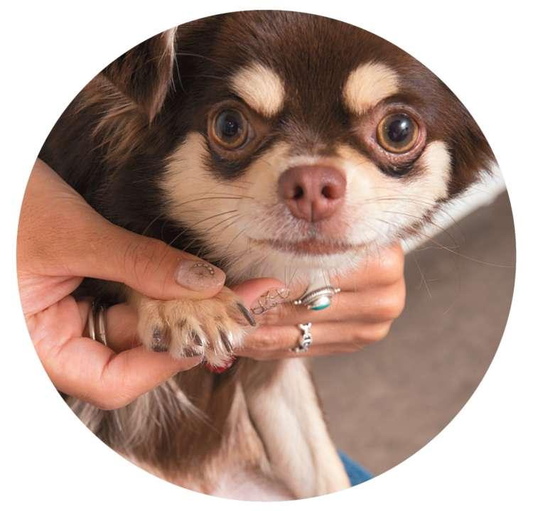 爪のケアも忘れずに。爪切りなどを自分で行 うのが難しい場合は、動物病院やトリミングサ ロンなどでやってもらうとよいでしょう