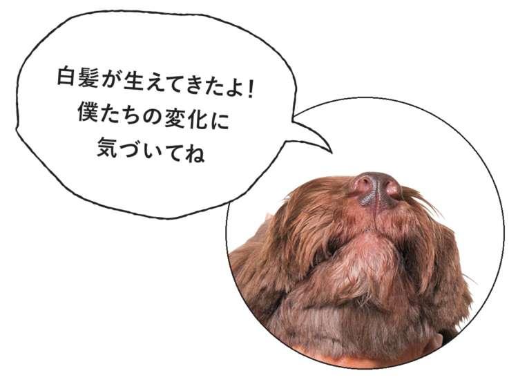 シニア犬に明確な定義はない?