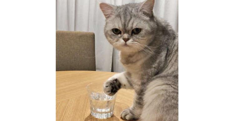 コップの水を美味しそうにペロペロする猫さん☆ その飲み方は、斬新すぎる方法なのでした(ΦωΦ)!