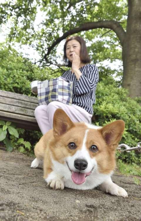 愛犬の様子と周囲への配慮をつねに心がけるようにする