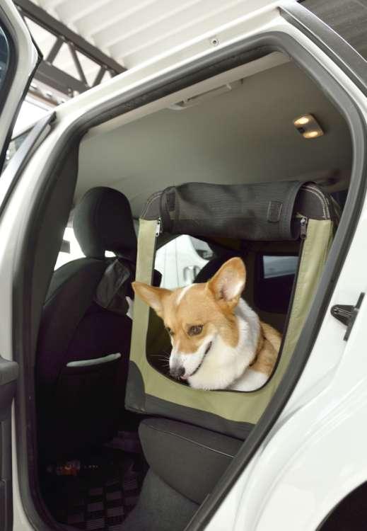 実家の犬を参考にして愛犬用に準備をカスタマイズ