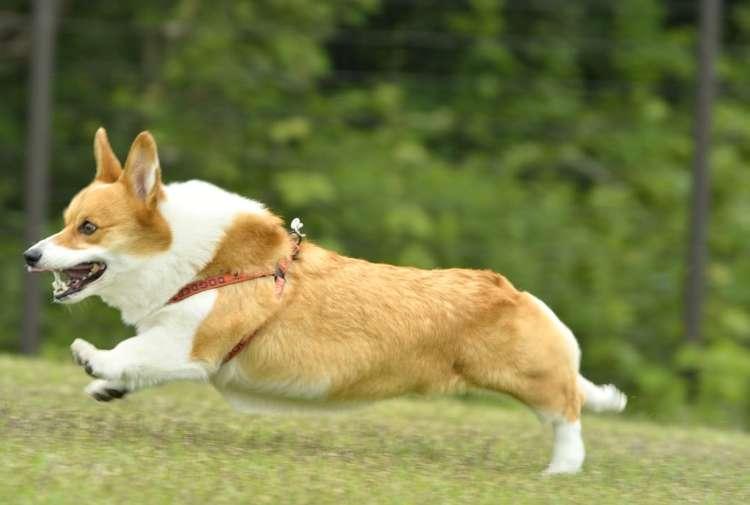 犬の性格や気質に合わせて旅支度を調えよう 時々、内容を見直してブラッシュアップを!