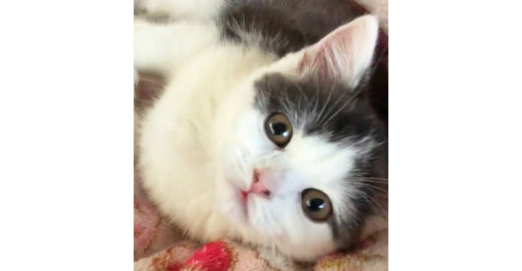 【そんなに見つめないで♡】ジッと注がれ続ける、猫ちゃんのあつ〜い視線に照れっぱなしの34秒(〃∇〃)