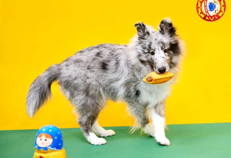 PECOBOX(ペコボックス)3月号は『世界旅行編・ロシア』!愛犬が喜ぶギフトの中身を解説♪