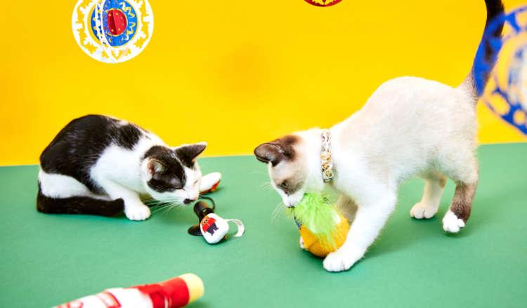 【愛猫用】PECOBOX(ペコボックス) 『世界旅行編・ロシア』受付中!愛猫のプレゼントの中身を解説