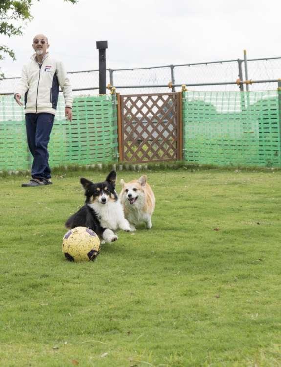 ご主人の斉さんが愛犬たちのために丹精込めて作ったプライベートドッグラン。きれいに刈り込まれた芝生で、思いっきりボール遊びを楽しむりりとルンルン。