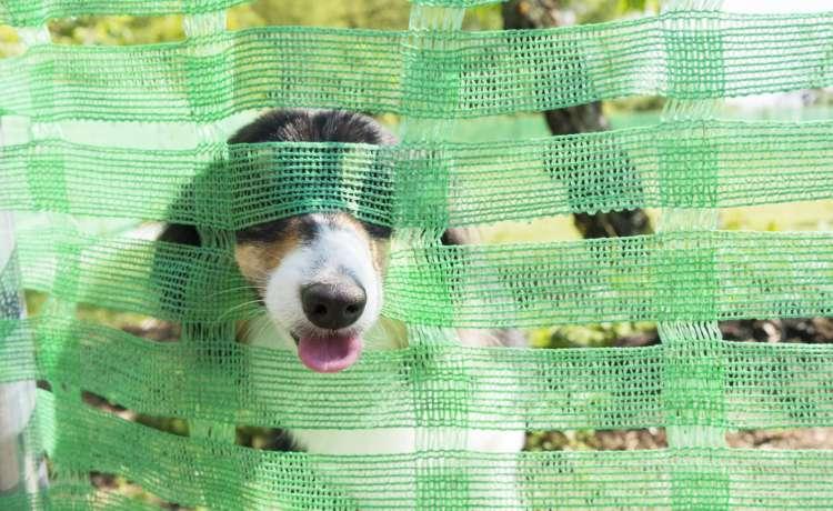 鬼怒川沿いの広大な土地に位置するプライベートドッグラン。もちろん脱走対策は万全だけど、ひょっこり鼻先を出しているコは、だ~れ~?