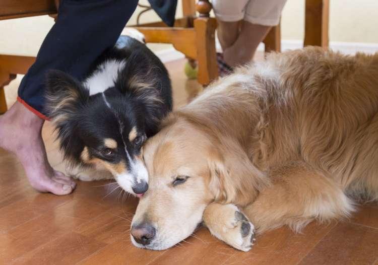りりやルンルンが大森家に来た時も、先住犬のライムはまったくいじめたりしなかったそう。だから、こんなに仲良し。確かに出かけなくても家の中だけで十分楽しそうだよね。