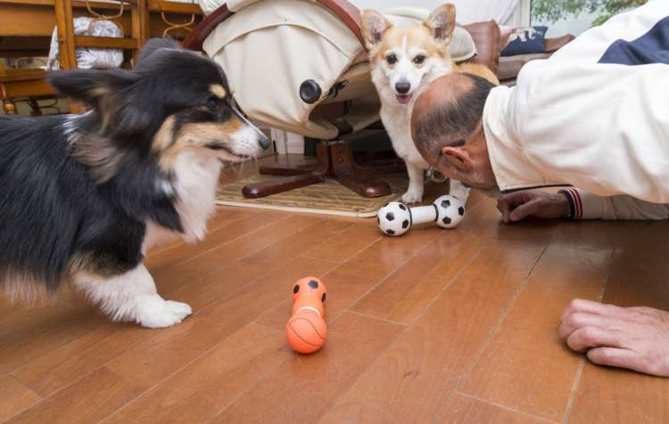 「私が犬のようになって遊ぶと、一緒に遊ぶんですよ」とパパさん。