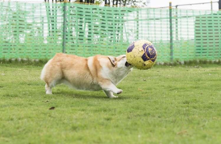 お~い、りりさん! サッカーはくわえて遊ぶスポーツじゃないのよ~。