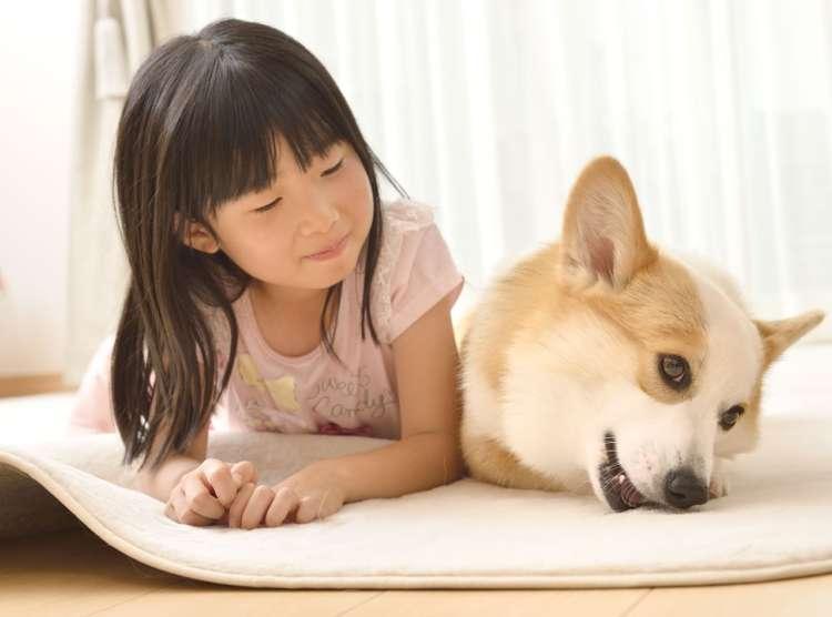 MY DOG! MY STYLE! 02 仲良し家族をもっと仲良くさせるために やってきた、穏やかな男の子コーギー