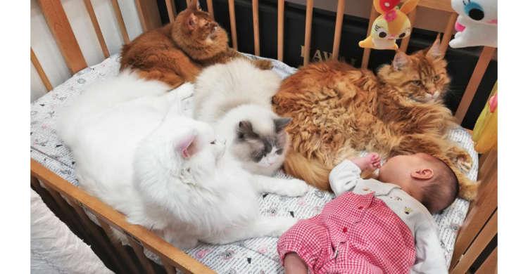 「この子は任せるニャっ!」赤ちゃんをガードする、優しいモフモフ見守り隊(∩´∀`)∩ 4枚