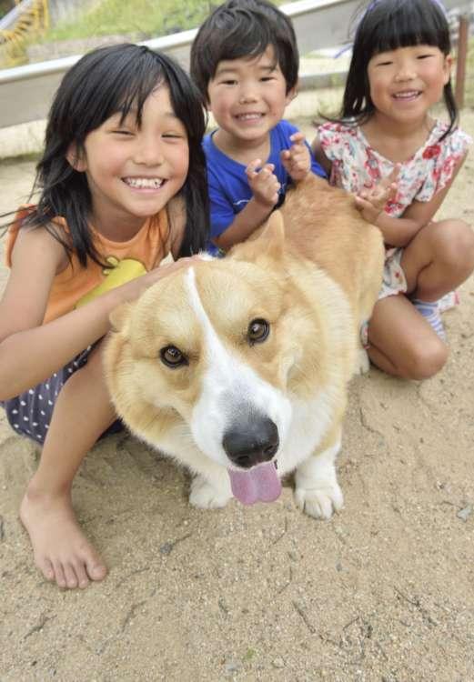MY DOG! MY STYLE! 03 近所の子供に手紙をもらうほど 地域ぐるみで愛されている名物犬