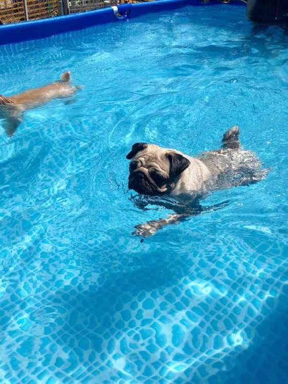 ついにプールデビュー! 泳ぎも上達しました