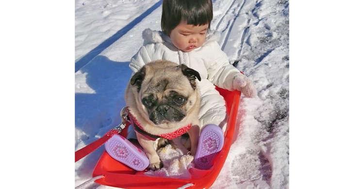 女の子とパグちゃんが仲良くソリに乗る♪ キャッキャと楽しむ様子が微笑ましかった(*´∀`)! 51秒