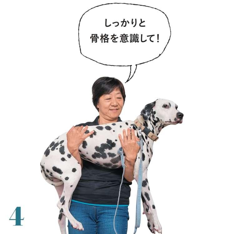 持ち上げたあとも、愛犬の背中が曲がってしまわないように注意して、体を支えましょう
