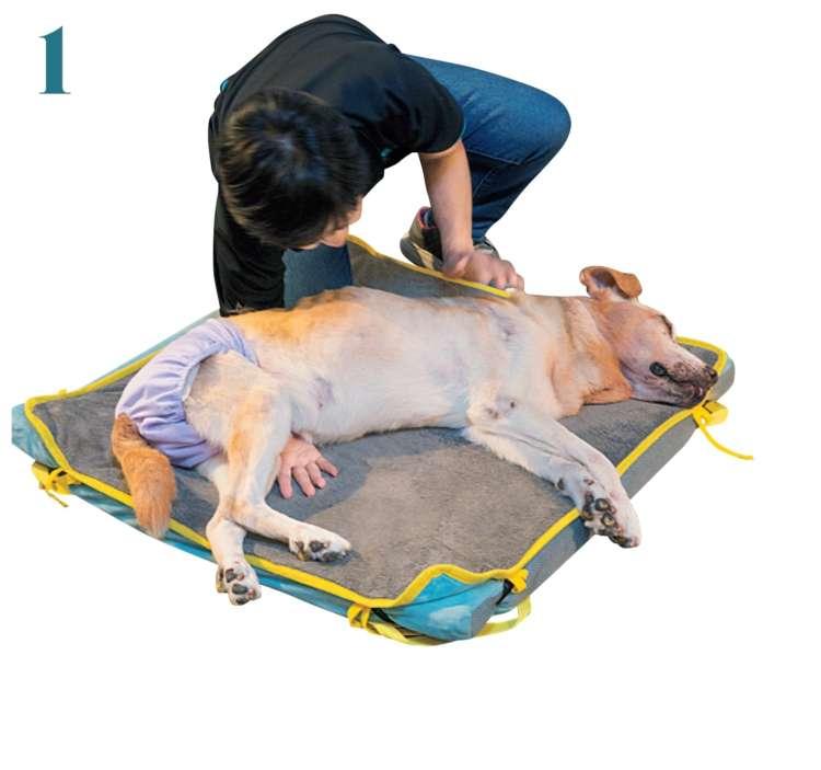 「抱っこ」をする前に、声をかけたり、体に触れたりして、飼い主さんの存在を認知させたら、愛犬の腰の下に腕を滑り込ませます