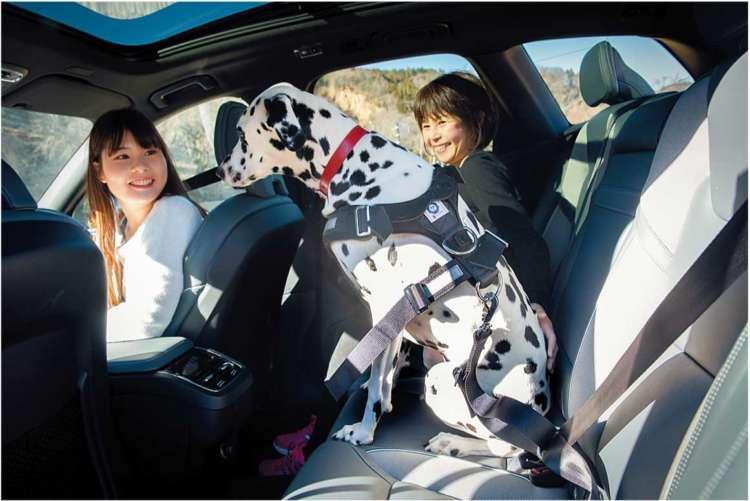 犬用のシートベルト