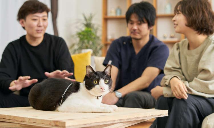 """""""猫""""専用フローリング誕生! 猫と暮らす住まいだから、キャットファーストで考えました!"""