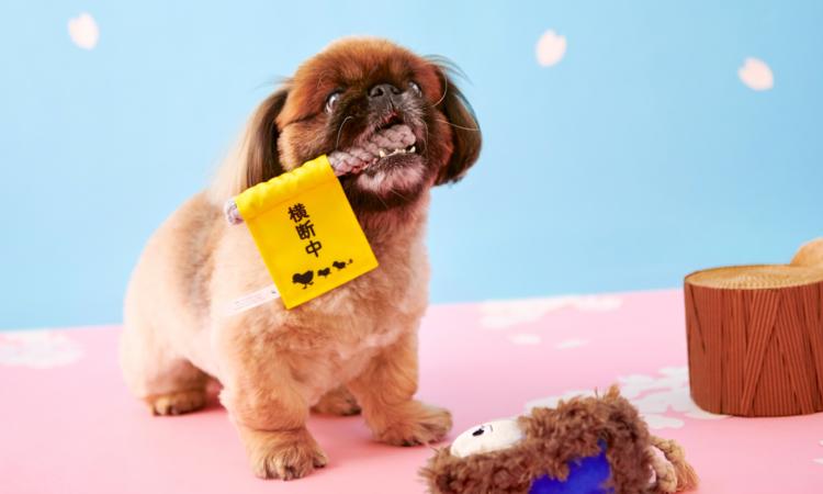 PECOBOX(ペコボックス)4月号は『スクール』!愛犬が喜ぶギフトの中身を解説♪