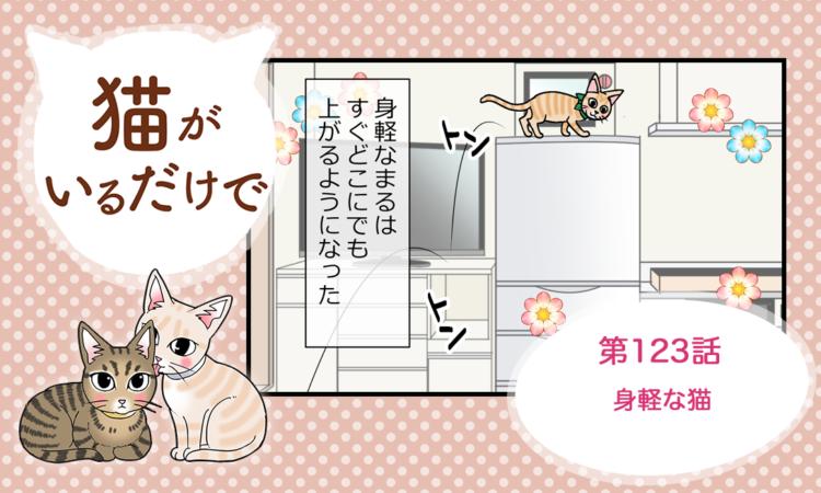 第123話:身軽な猫