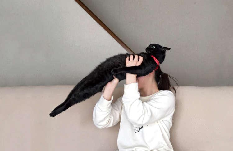 【猫びより】【ウチのコへんてこ自慢】背筋がピーン!! うるる(辰巳出版)
