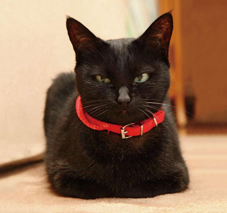 猫らしく、香箱座りだってできるんです