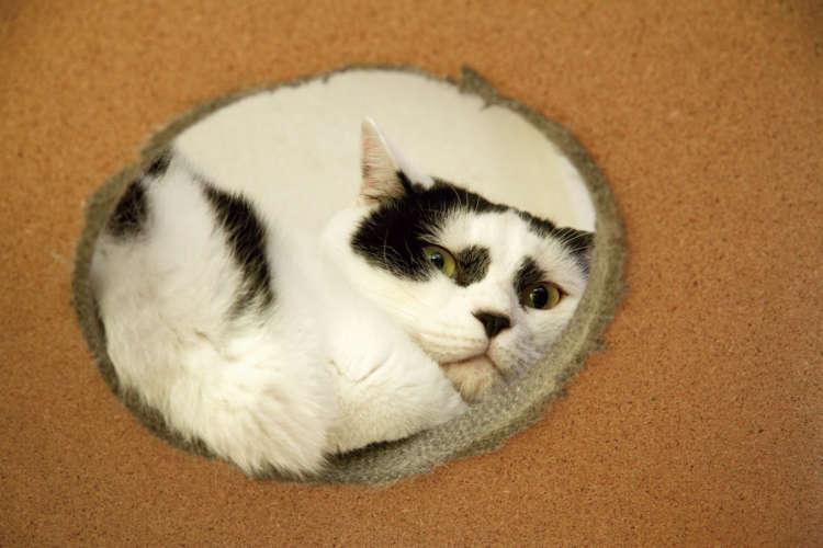 「『にらみ顔が素敵』と言われますが、にらんでいるのではありません。心優しき猫なんです」