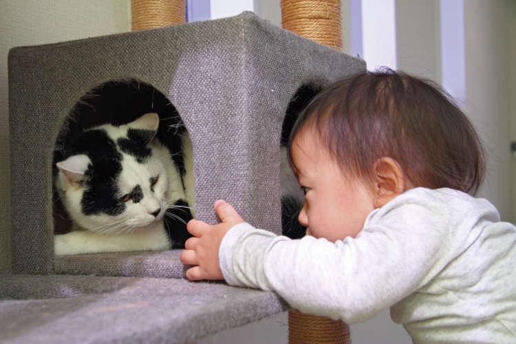 1歳の義経くんは、カブキにとっては見守るべき存在?