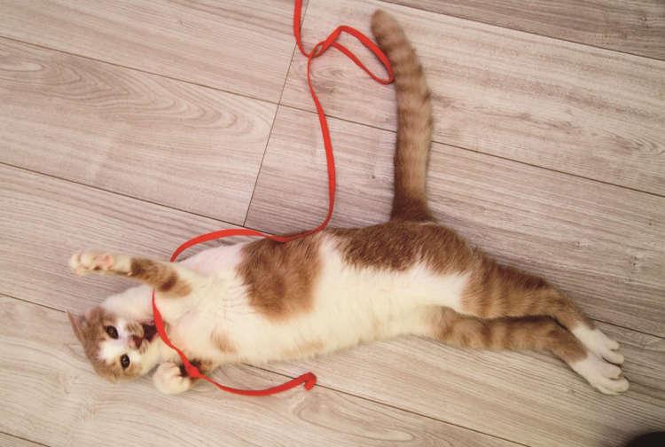 子猫のサンズは無邪気に愛嬌を振りまく