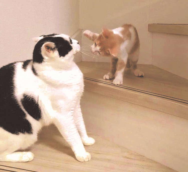 カブキと新しい家族のサンズ、成長記録はInstagramでも人気(写真提供:海江田恵)