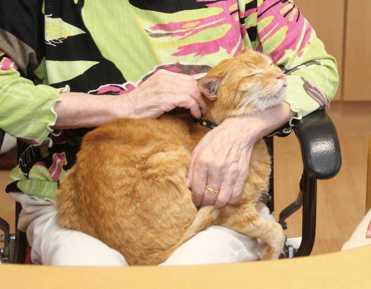 【猫びより】【老いと猫】脳神経外科が語る ネコの健康パワー(辰巳出版)